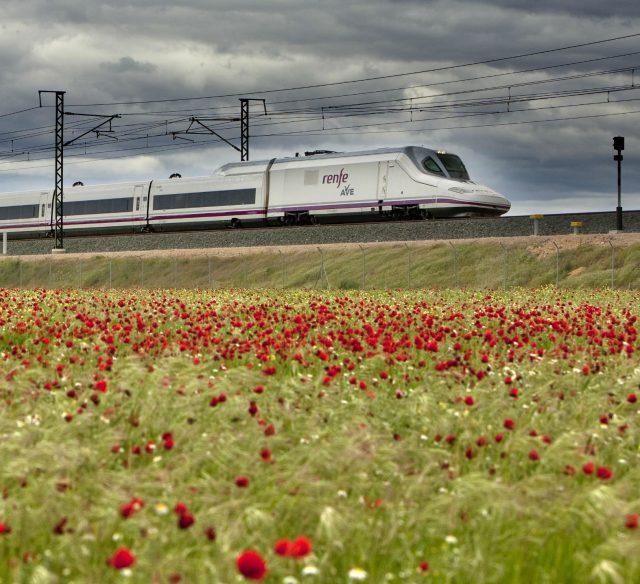 Tren AVE detrás de un campo de amapolas.