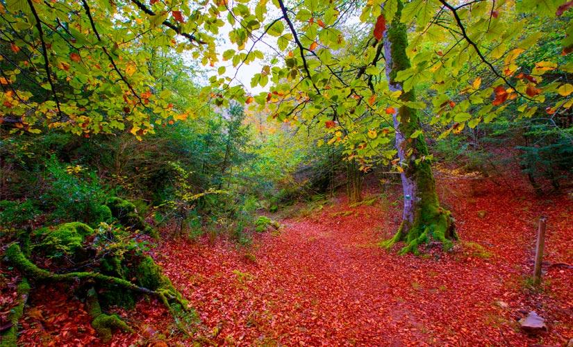 La Selva de Irati en Navarra