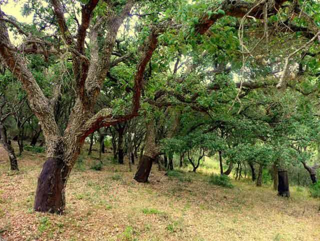 Los mejores parques naturales de Andalucía, como el Parque Natural de los Alcornocales