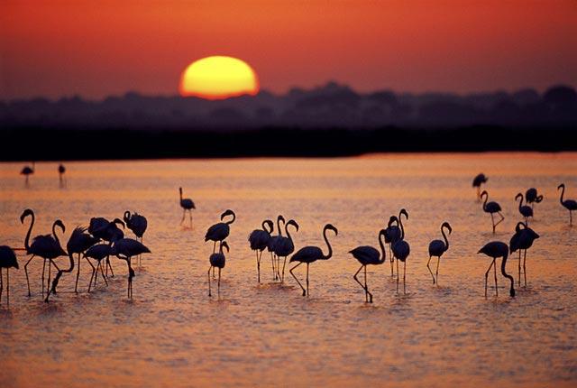 Doñana, uno de los mejores parques naturales de España