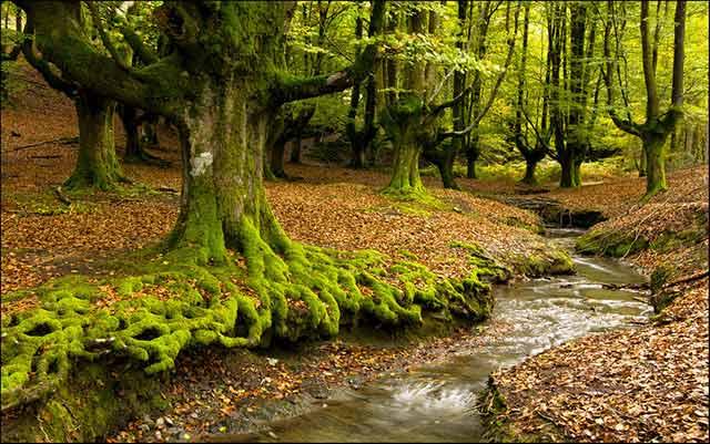 Gorbea, parque natural en el País Vasco
