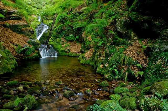 Parque Natural Saja Besaya en Cantabria